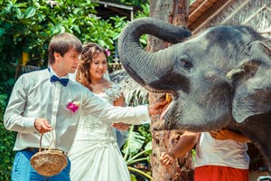Bride and Groom feeding an elephant in Phuket for their wedding photography