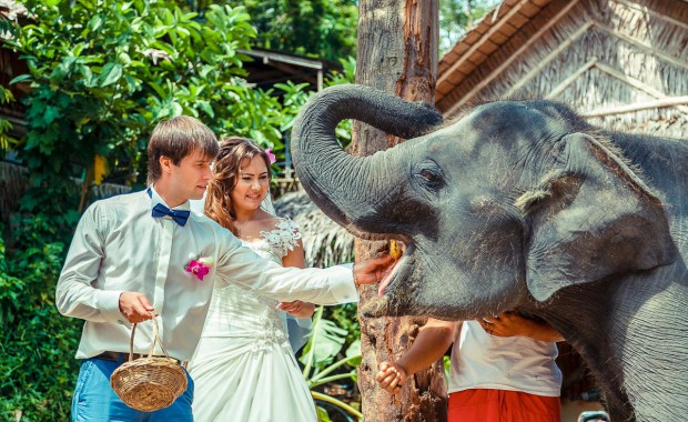Couple feeding baby Elephant during pre wedding photography session